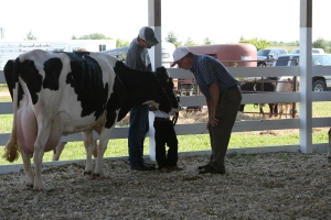 Talking with the Dairy judge