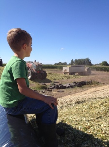 Everett watching the loads come in from the top of a silage pile